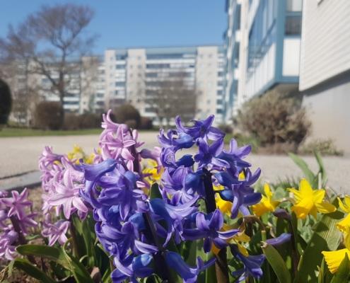 Vårens färgklickar i mars.